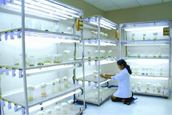 Regional Ayurveda Institute for Fundamental Research - [RAIFR]